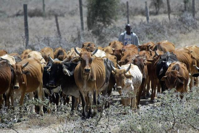 Why herdsmen killed over 80 people in Plateau – Miyetti Allah